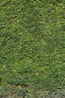 Ivy Texture - 6 by AGF81