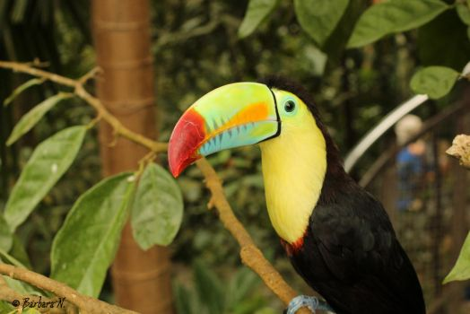 Toucan or not toucan by NoGuarantee