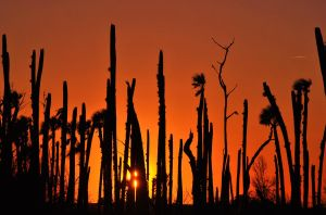 Sunset in the Palm Forest by libertine1182