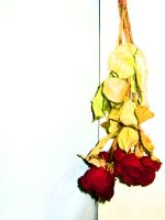 dried roses_a by neonikkichan