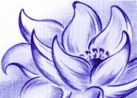 Lotus Blossom by Sultzaberger