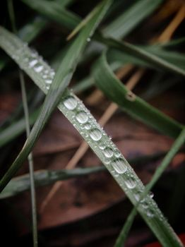 Water Drops by blackismyheart90