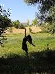 Dancing Silhouette by MelissMySiss