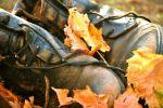 Covered in Autumn by Zelma1