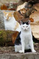 two cats by schattenlosefotos