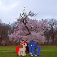 Under the cherry tree by Pacman552