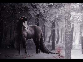 blood rose, by lairelark