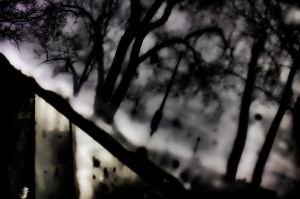 reflection of a forest by lightzone