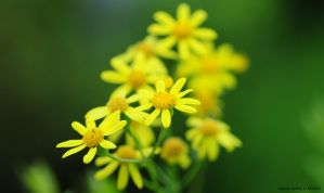 Yellow and green by ciprinel