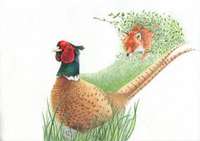 Pheasant and fox by Taniquelasse