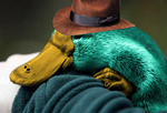 Perry the Platypus by optical-jackson