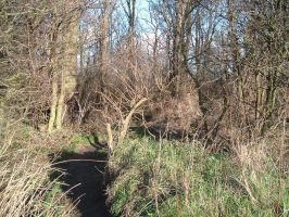 Copse stock 7 by RobynSmaleBeorg