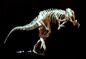 suchomimus skeleton2 by hannay1982