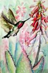 Anna's Hummingbird and Aloe Blossoms by PonderosaPower