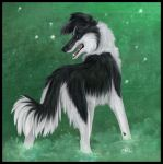 Green-Border Collie by daisy7