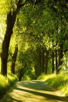 Forests of my iPod by Mmagoo
