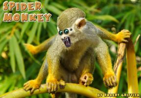 Spider Monkey by AskGriff