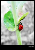 lady bug by letsflykites