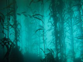 Kelp Forest 2 by Exodus5139