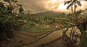 rice terraces bali 12 by worldpitou