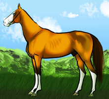 Animated Horse Show Entry by DesertSunStables