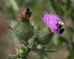 Thistle Twister by photorip