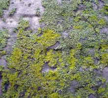 Headstone Moss 2 by PariahRisingSTOCKS