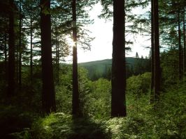grizedale by harrietbaxter