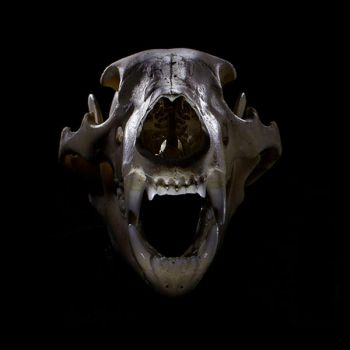 Skull by DX2Photography