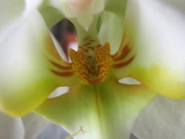 Inside an orchid by SayTunaFeesh
