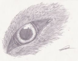 wolf eyes 2 by Swiftlook