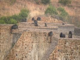 Monkeys on the dam by RiverKpocc