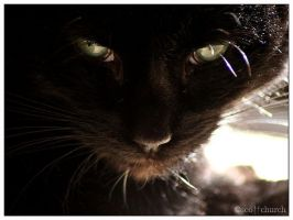 my little black cat by scottchurch