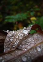 autumn rain by swestberg