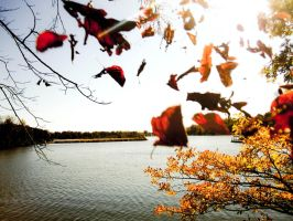 Fall in Indiana by Know-The-Ropes