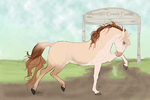 1193 Shes Like the Wind by AutumnCreekFarms