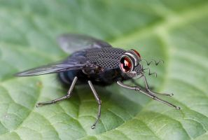 Mechanical Fly by SarahharaS1