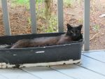 Lounging Black Cat by Apollo360