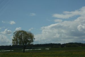 view to tree 54 by ingeline-art
