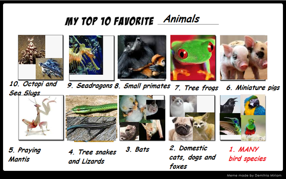 top 10 favourite animals meme filled by me by Roses-and-Feathers