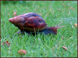 Snail in the Grass by RandyHand