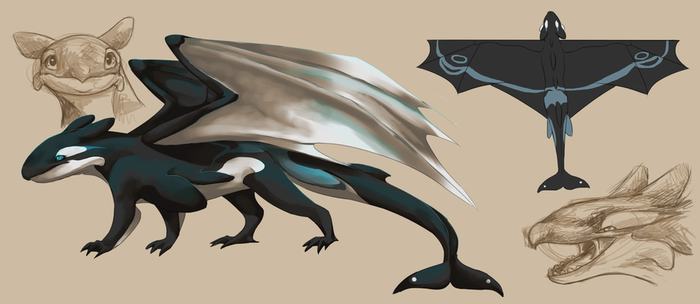 Orca Dragon Concept by Finchwing