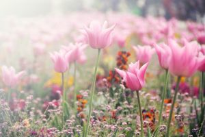 flowers in Paris by Anbec