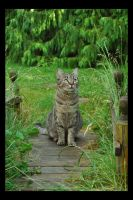 The Bridge Cat by Forestina-Fotos