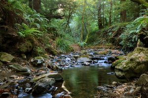 Purisima Creek III by FeralWhippet