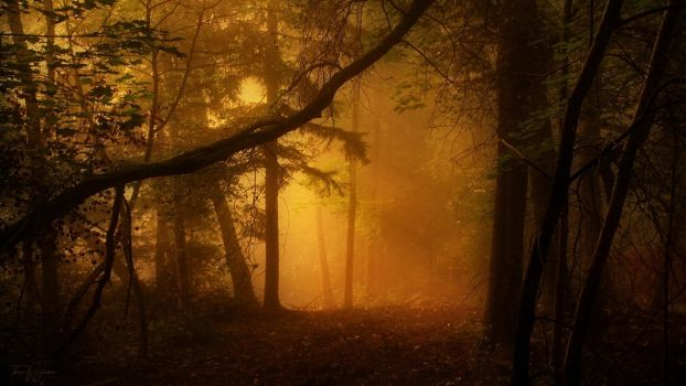 Misty Forest by Pajunen