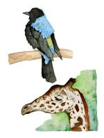 Bird and Giraffe watercolors by JMarcDodsonJr