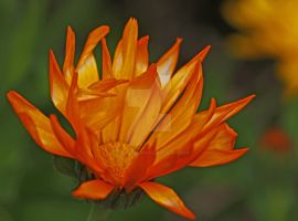 flames... by clochartist-photo