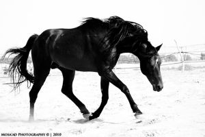 Horse 3 by msd-m