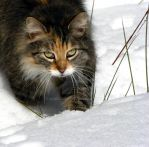 Puss in Snow by KAKruger
